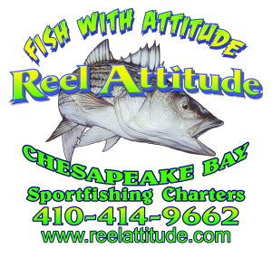 Chesapeake Bay Fishing Charter Trophy Rockfish Season